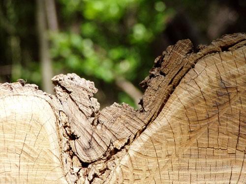 Nur Holz?