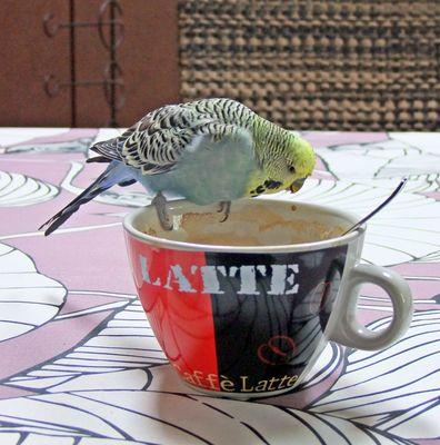 nur Kaffee...