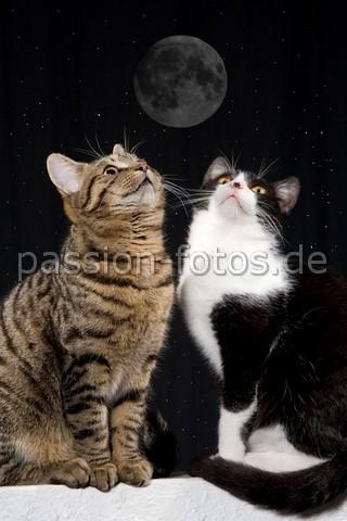 nur mit dir strahlt der Mond so schön