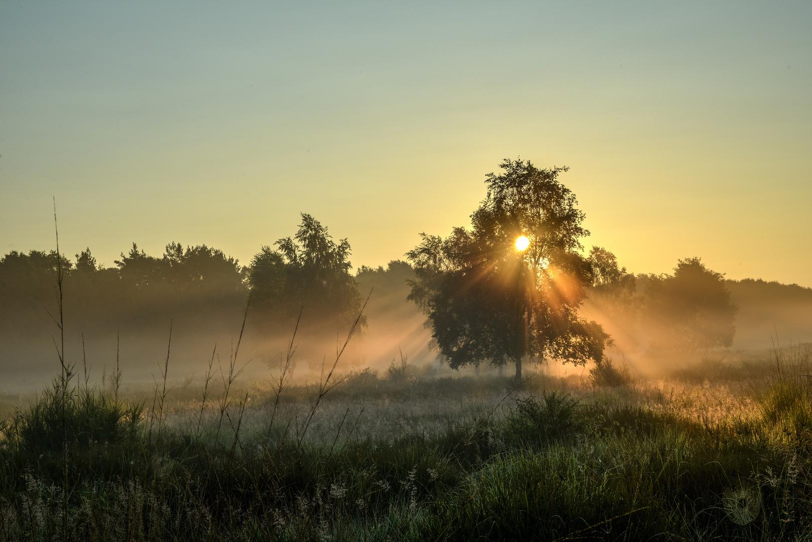 Nur Morgenlicht