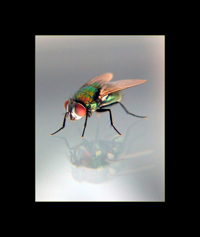 nur ne Fliege