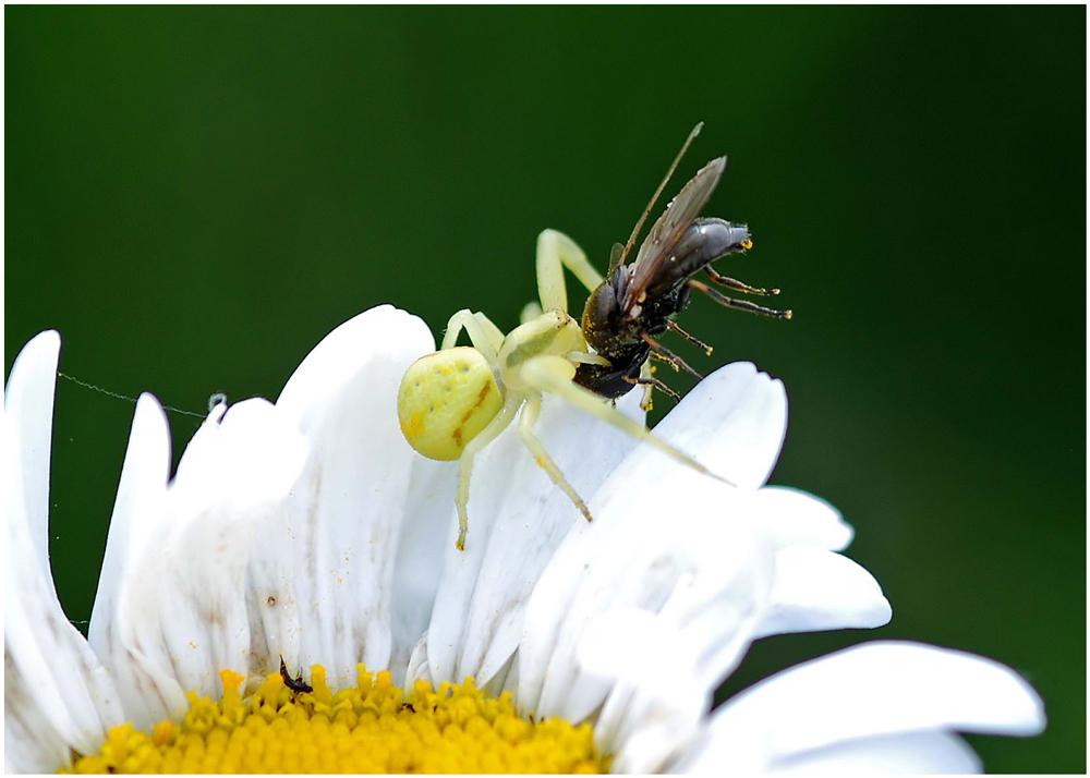 Nur Pollen
