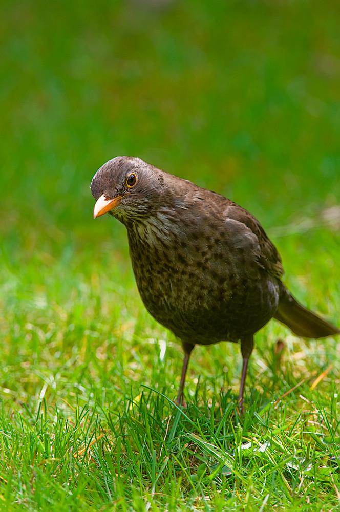 Nur schräge Vögel hier...