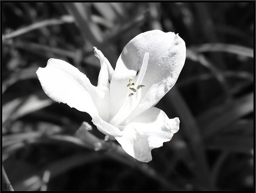 ...nur Schwarz Weiß...