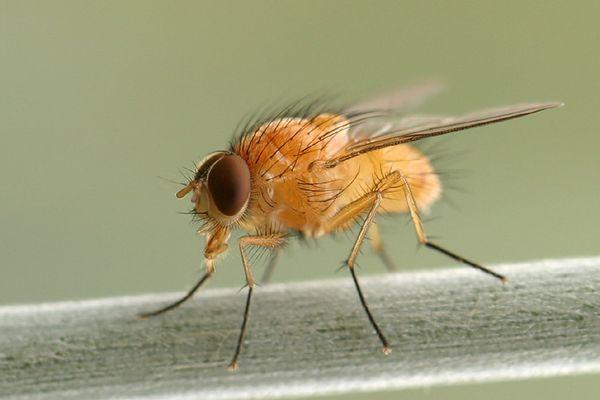 Nur so eine Fliege am Wegrand