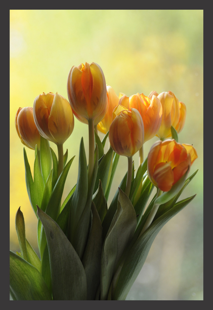 Nur Tulpen!