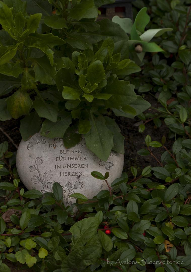 Nur wer vergessen wird stirbt wirklich... - Hauptfriedhof Dortmund V