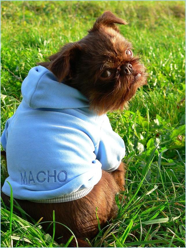 Nur wo Macho draufsteht ...
