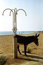 Nur zweibeinige Esel duschen nicht, bevor sie ins Wasser gehen...