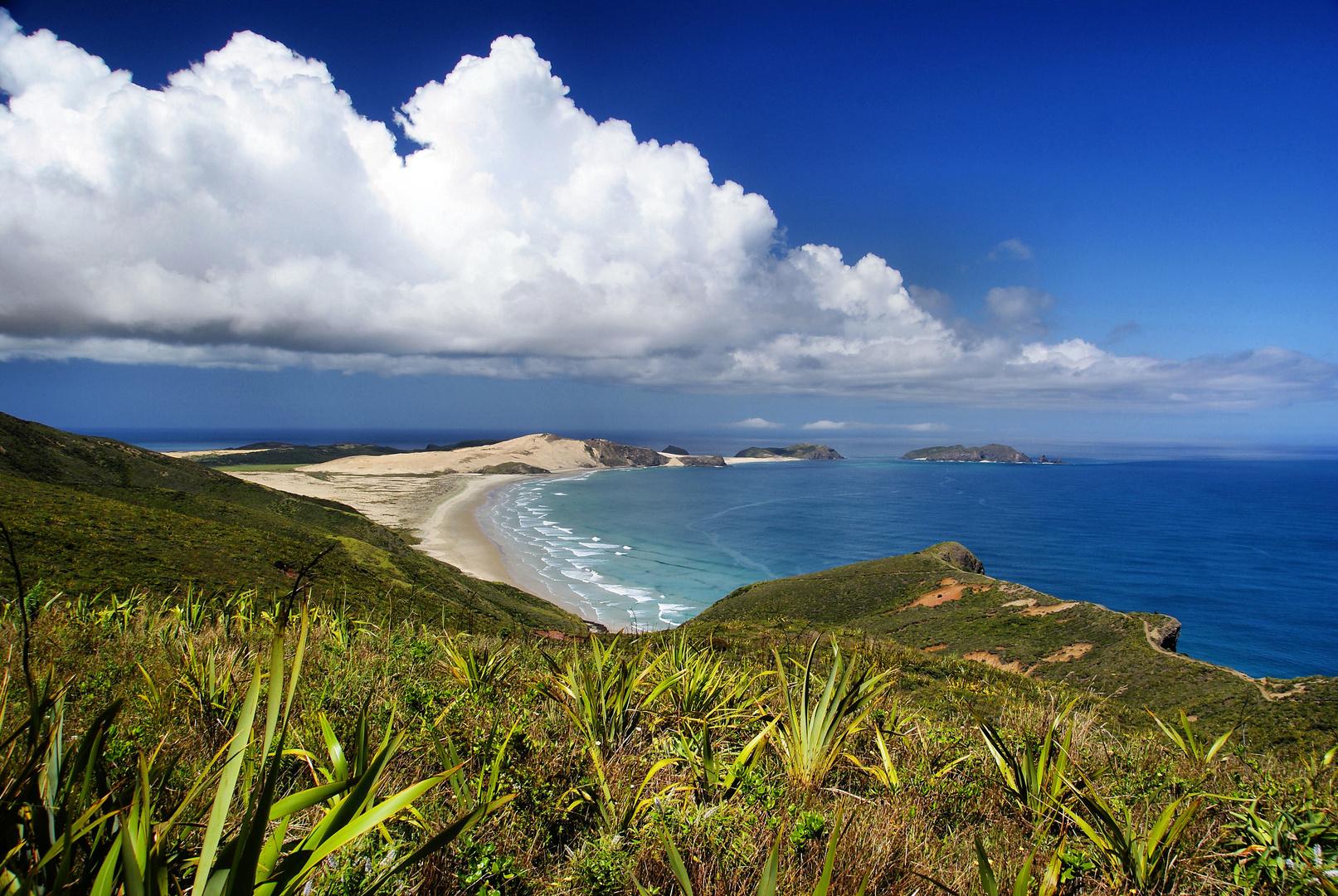 NZ Blick vom Cape Reinga zur Tasman-See