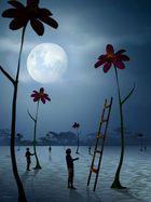 O Espaço das Flores.