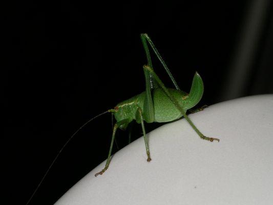 O Schreck ein Insekt *g*