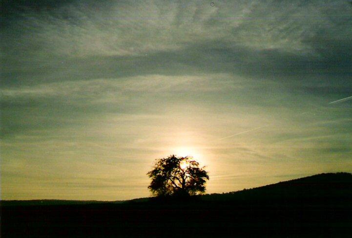...o0O.shiny tree.O0o...