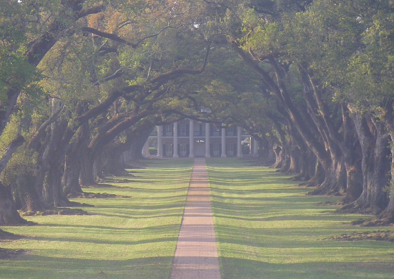 Oak Alley Plantation im Morgendunst