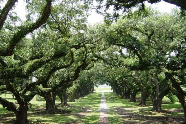 Oak Alley Plantation / Louisiana