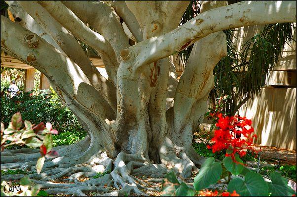 Oase EIN GEDI-Riesigen Bäumen und Blumen(Foto5)