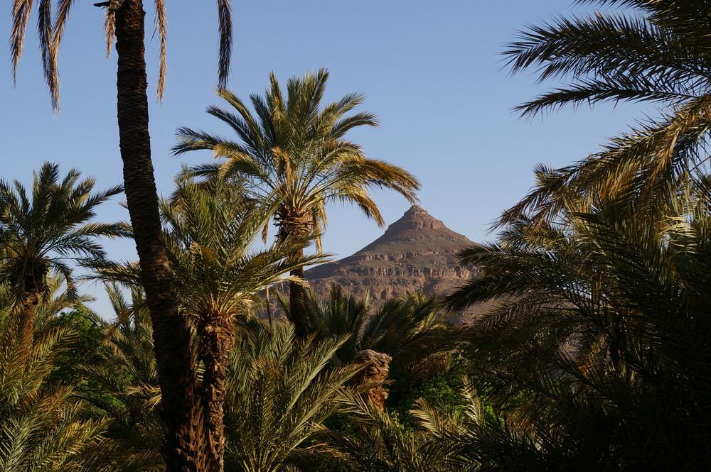 oasis Sud Maroc (Bleida)
