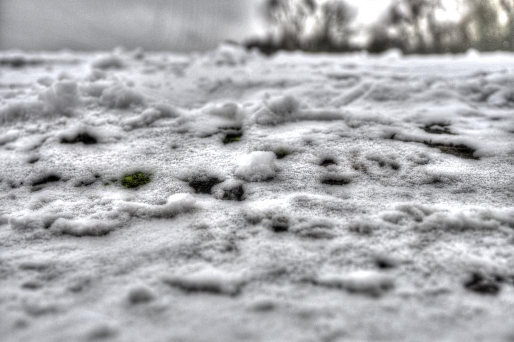 ob da nen Alien im Schnee geblutet hat?