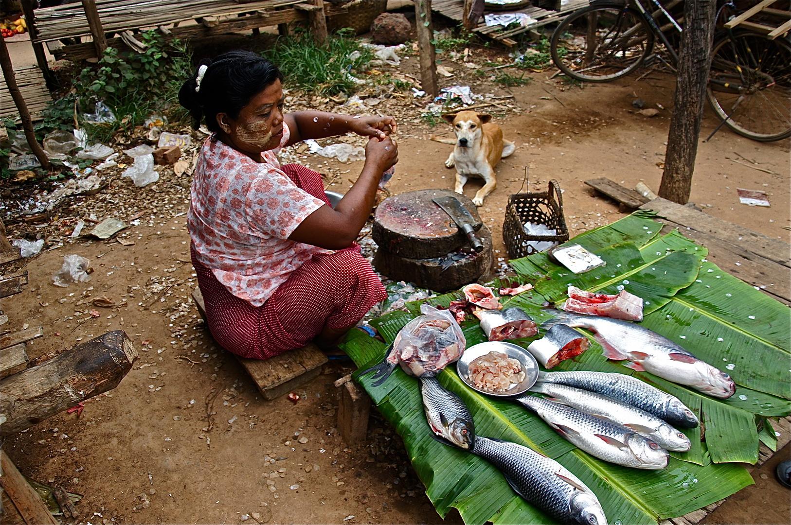 ob hunde fisch mögen ?.....................keine ahnung !