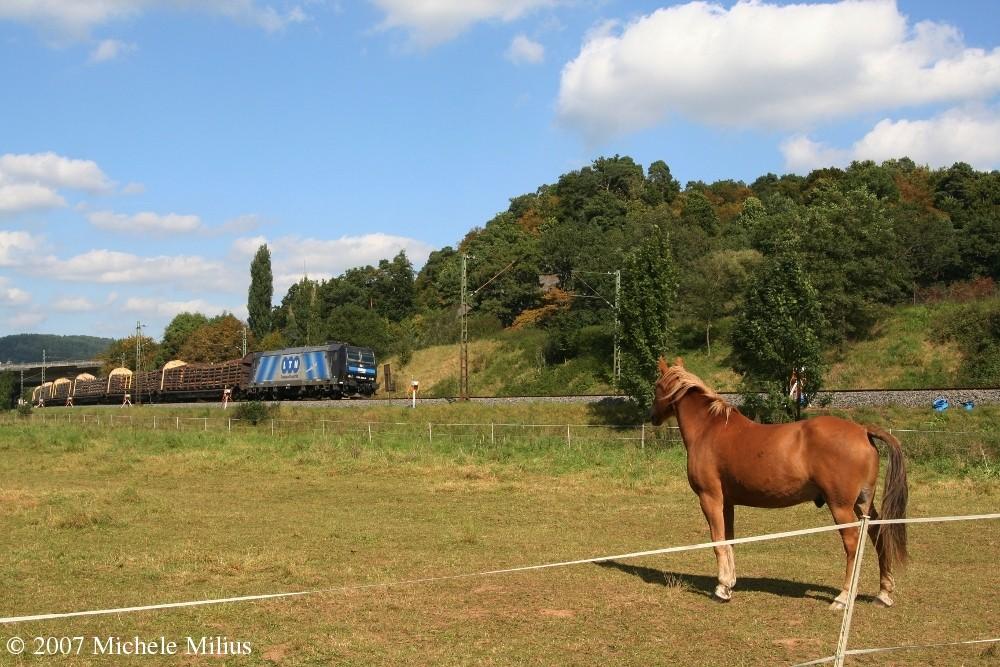 Ob Pferde