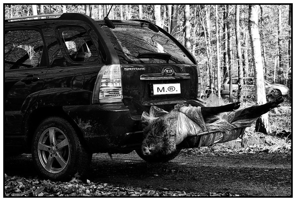 Obelix beim Jagen 2010