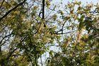 Oben in den Bäumen