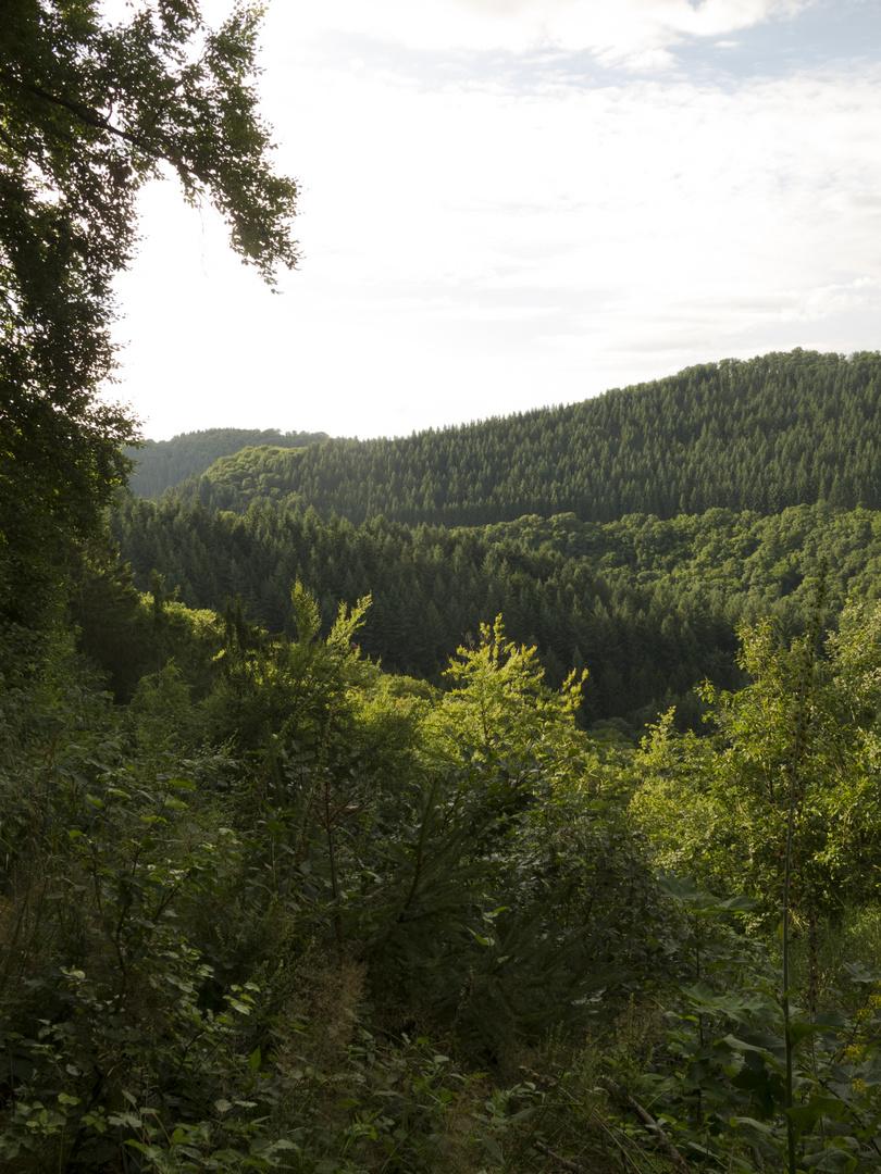 oberhalb Lieserpfad