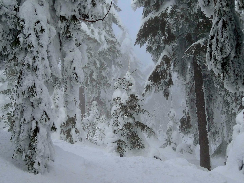 Oberwiesenthal in Februarnebel 2013 - 3