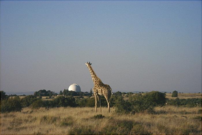 Observatorium + Giraffe