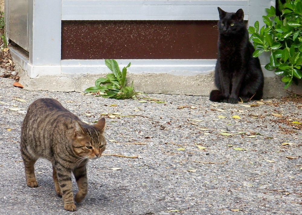 Observer (Le village des chats II)