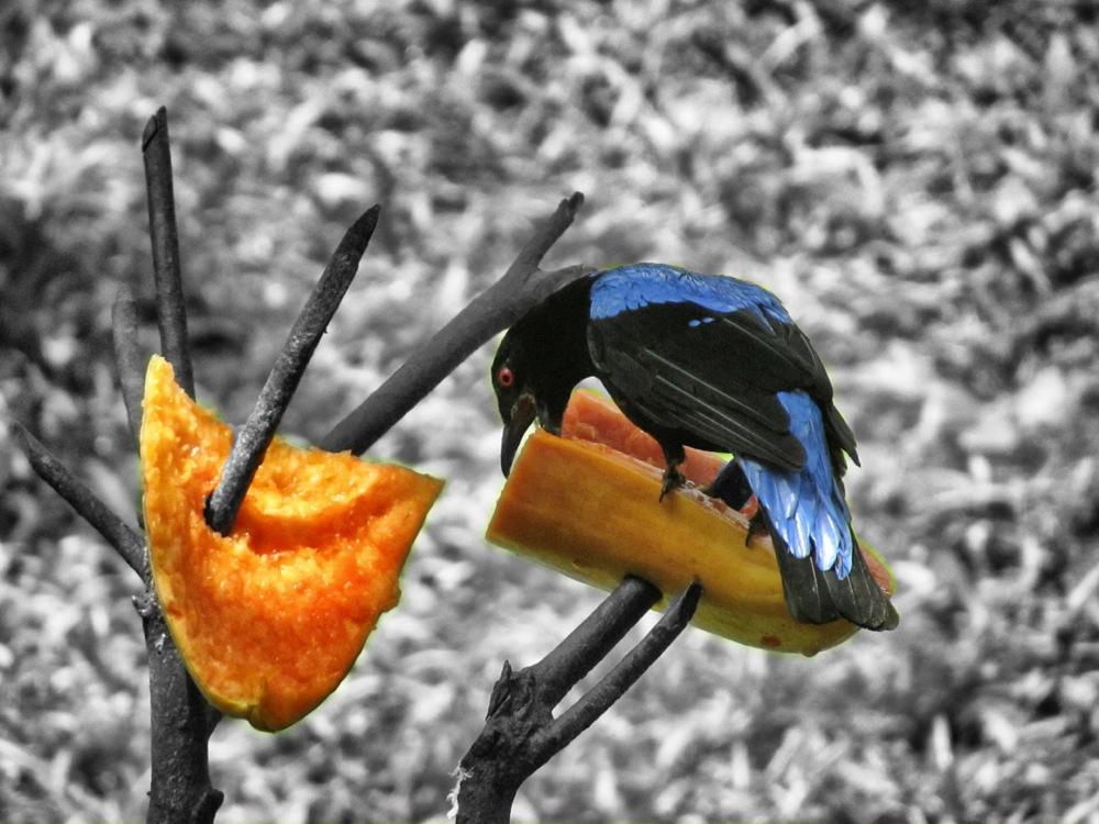 Obst in gesund