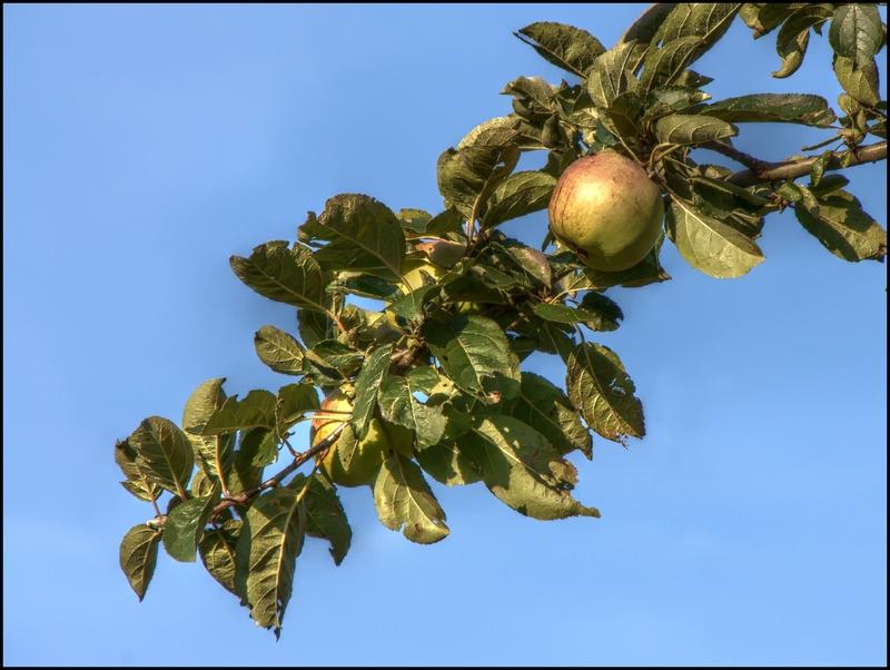 Obst - nur mit dem Tele zu erreichen