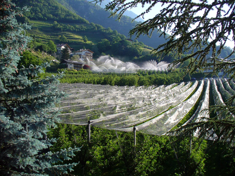 Obstbäume am Berg - Naturno - Naturns Südtirol