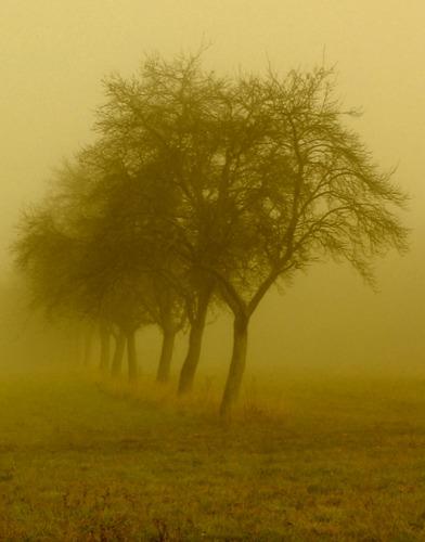 Obstbäume im Nebel