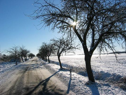 Obstbäume im Winter....