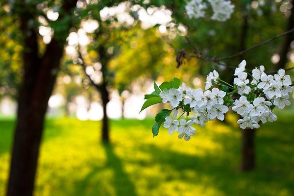 Obstbaumwiese im Morgenlicht