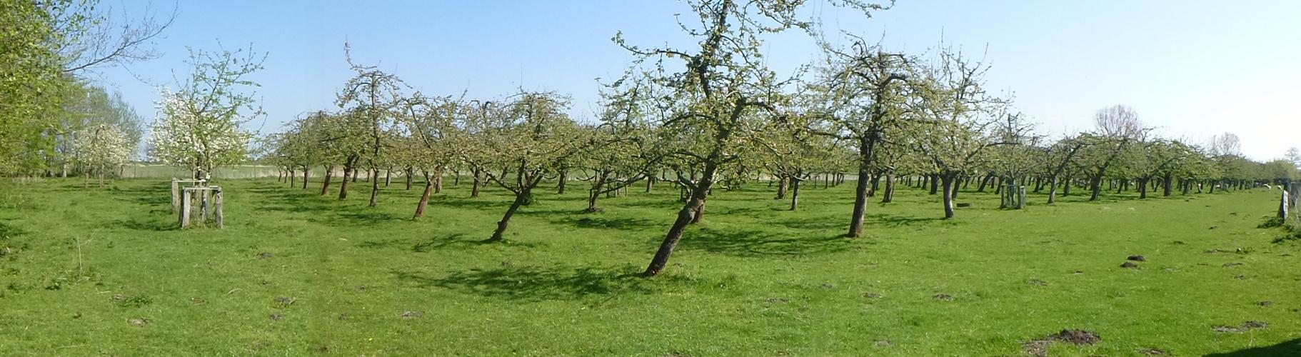 Obstgartenpanorama