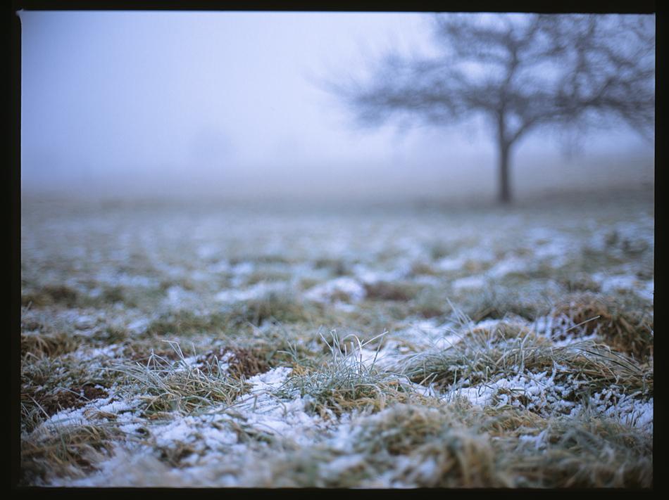 Obstwiesenfrost