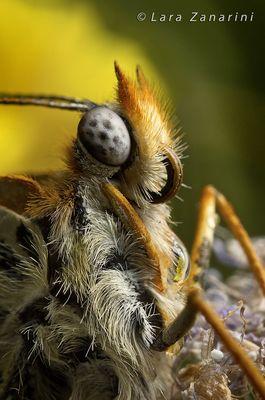 occhi di farfalla con fiore riflesso nella goccia di rugiada