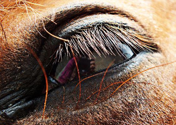 Occhio della mia cavalla