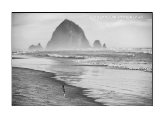 Ocean Feather