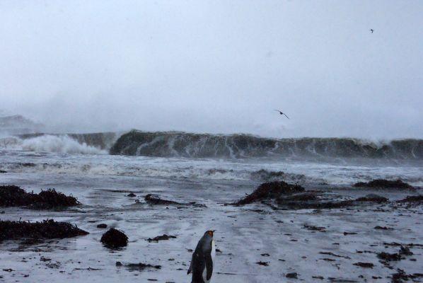 ocean indien dechéné suite a une tempete