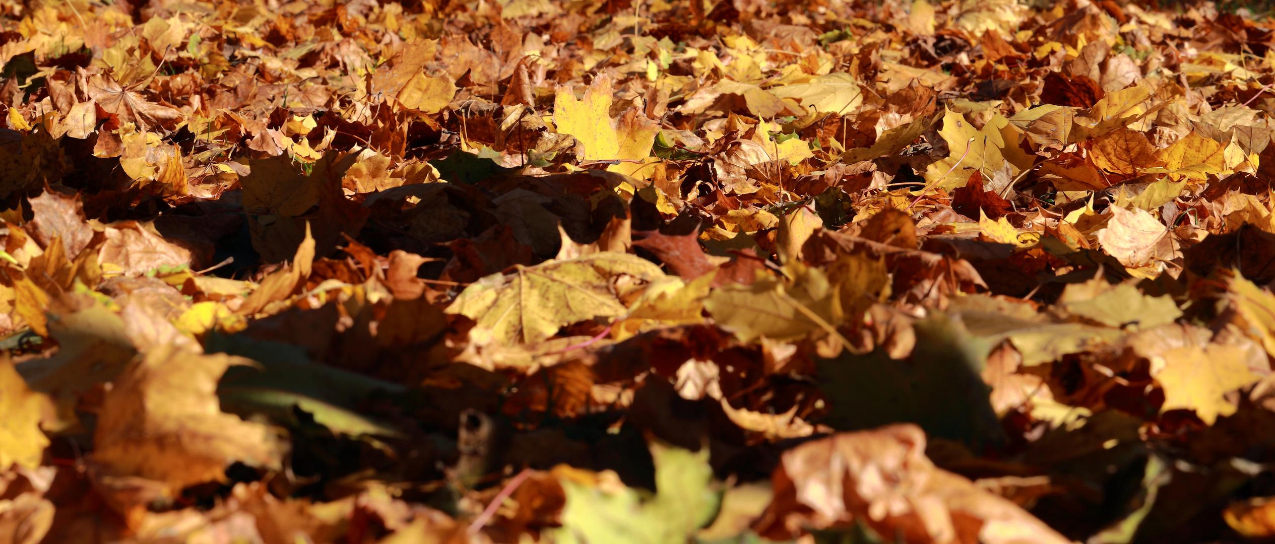 Ocean of leafs