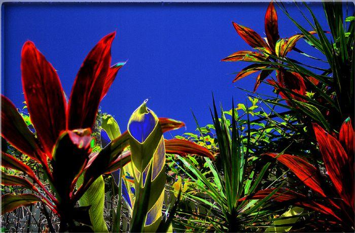 Ocean Walk flowers