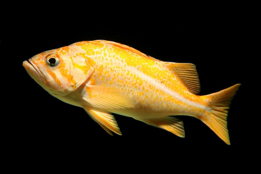 Oceanario Lissabon #1 - Fisch