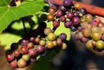 October Harvest (6)
