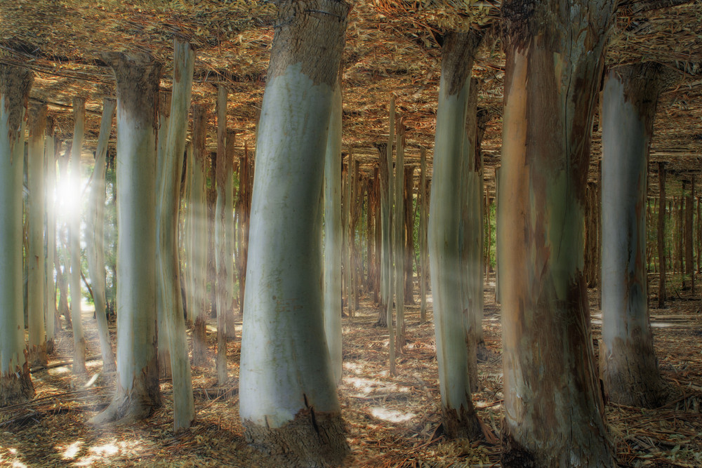 Odd Forest - Reloaded