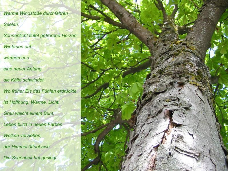 Ode an den Baum