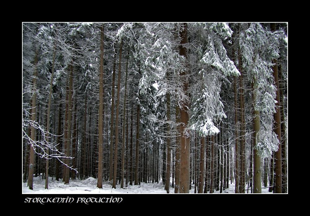 Odenwälder Winterspaziergang