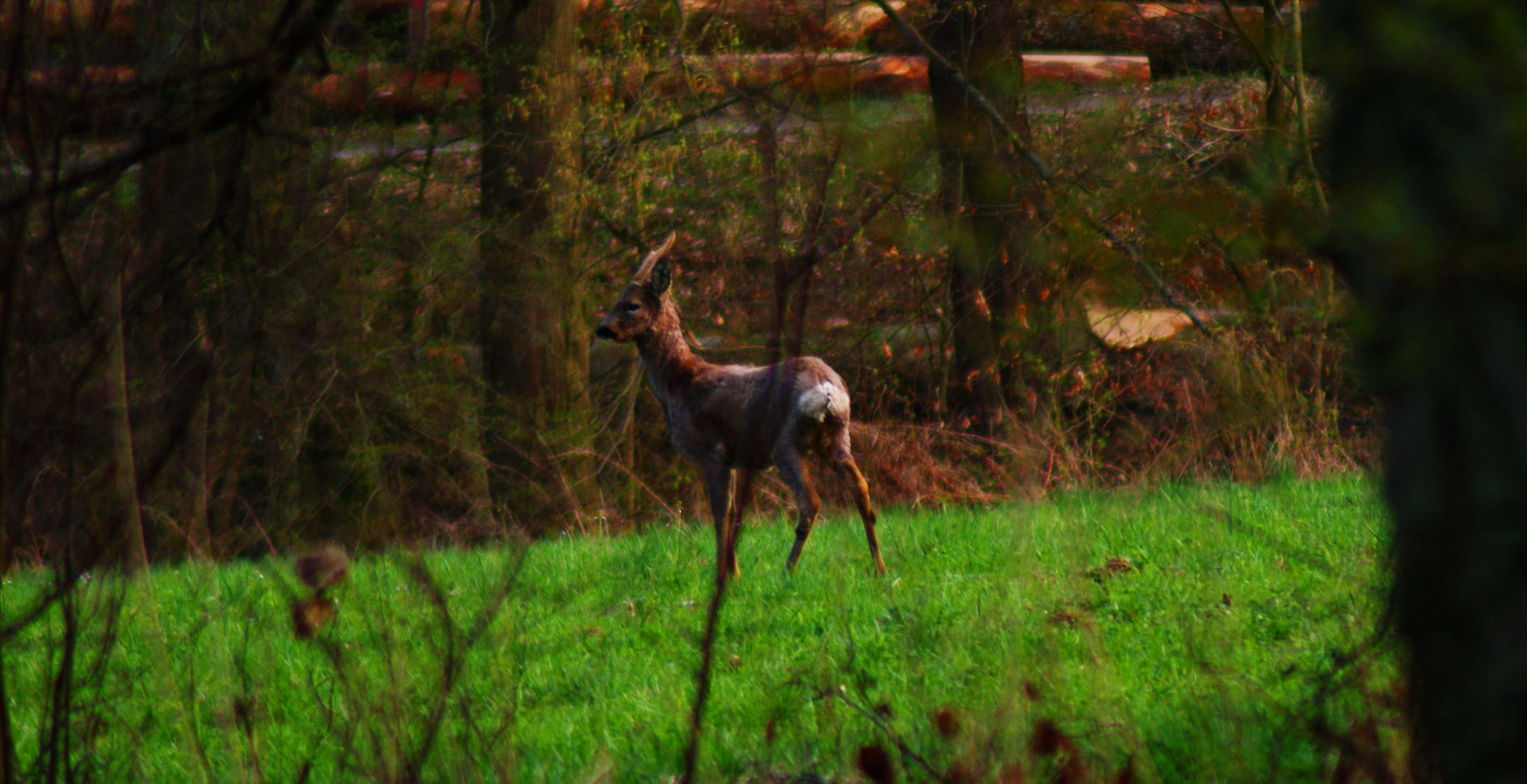 Odenwald-Wildlife